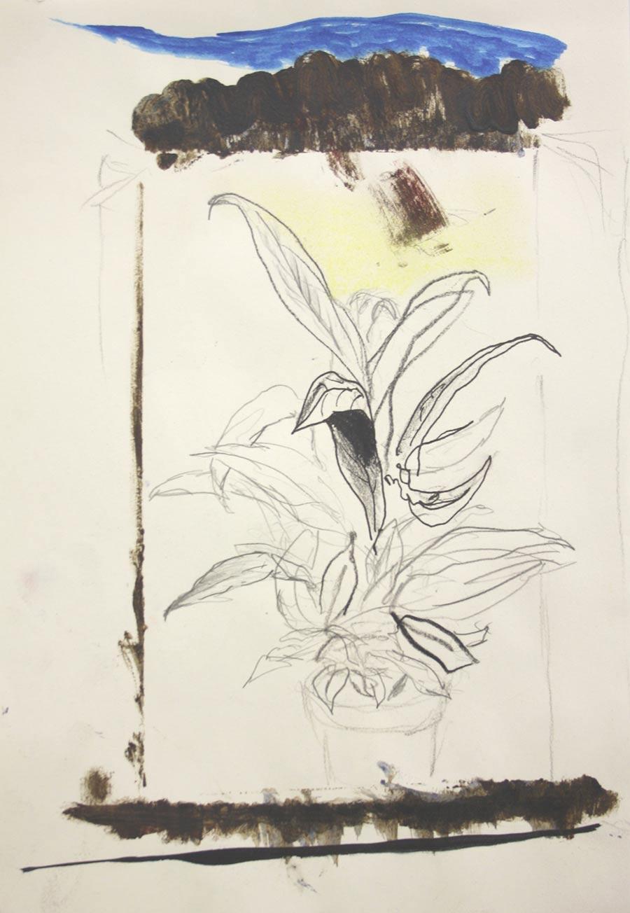 luca-grechi-pianta-vaso